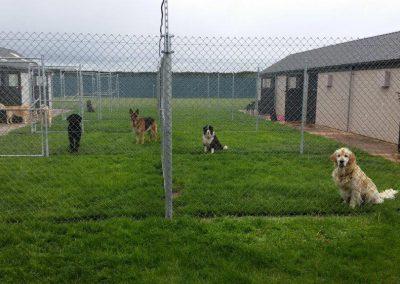 6m x 4m individual dog runs
