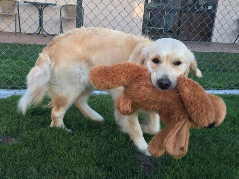 Doggy loves his soft toy