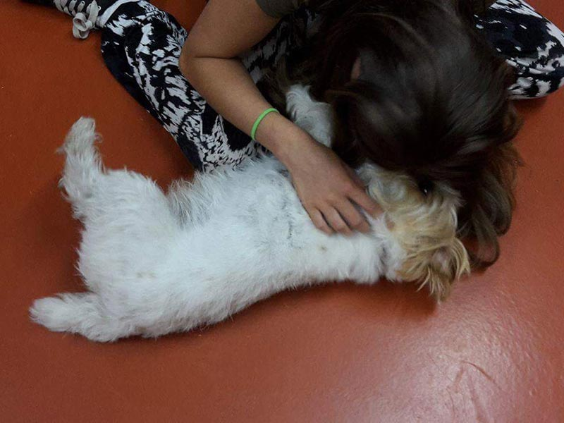 Doggy tickles at the boarding kennels